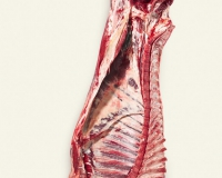 Half carcass (1)